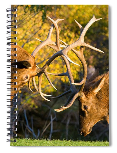 Two Elk Bulls Sparring Spiral Notebook