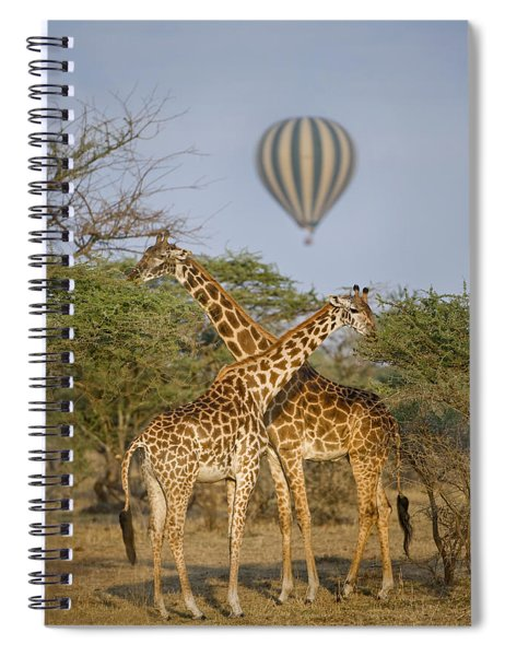 Two Masai Giraffes Giraffa Spiral Notebook