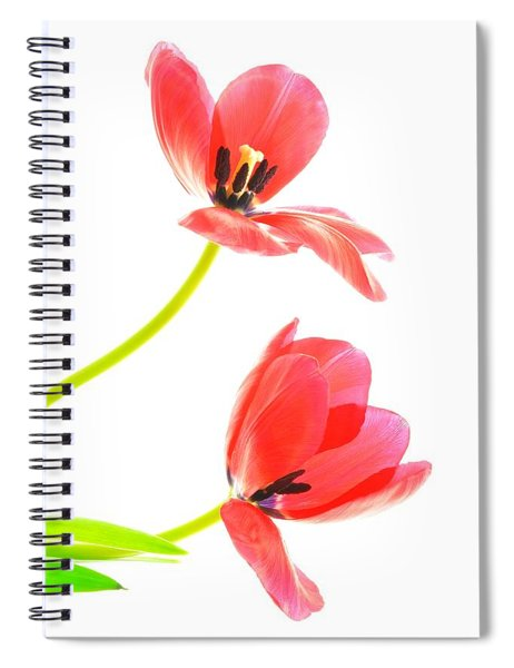 Two Red Transparent Flowers Spiral Notebook