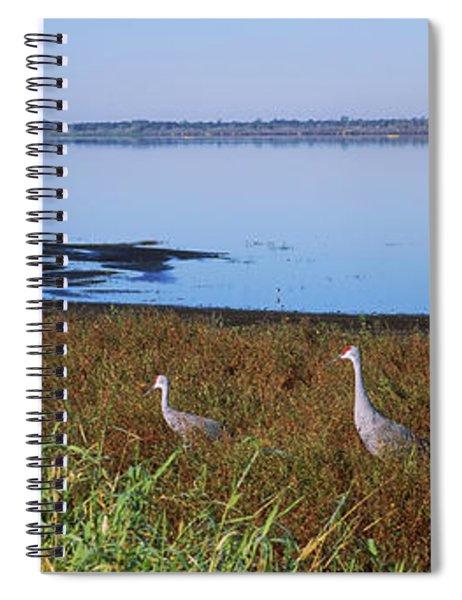 Two Sandhill Cranes In A Field, Myakka Spiral Notebook