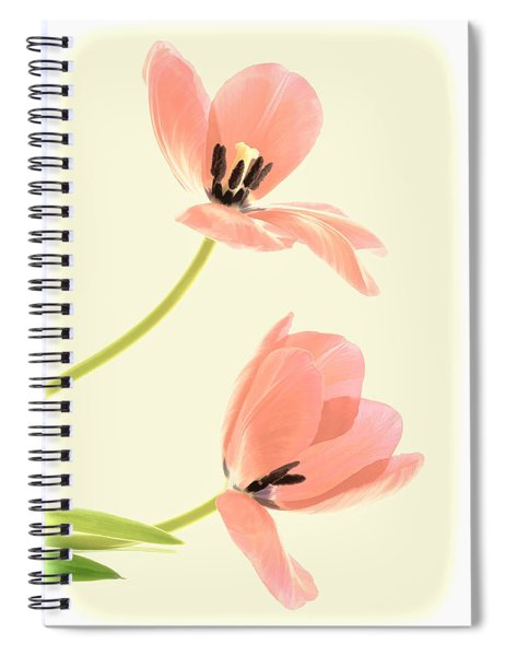 Two Tulips In Pink Transparency Spiral Notebook
