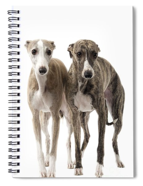 Two Whippets Spiral Notebook