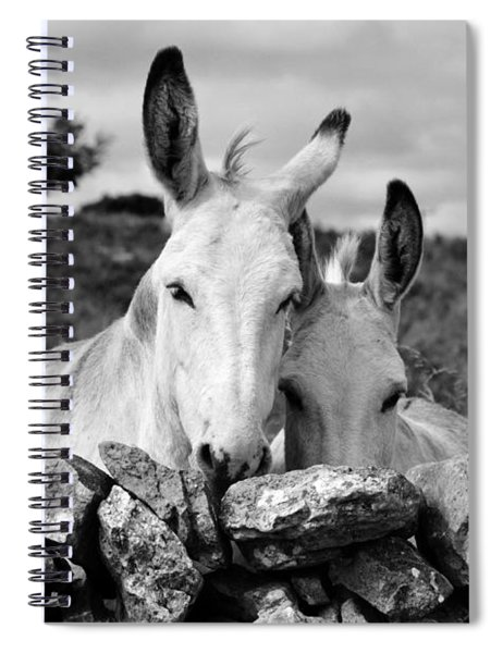 Two White Irish Donkeys Spiral Notebook
