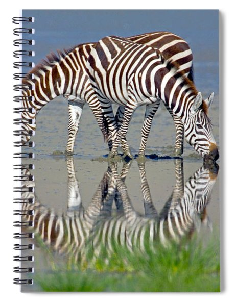 Two Zebras Drinking Water From A Lake Spiral Notebook
