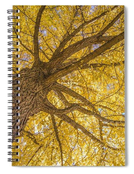 Under The Autumn Tree Spiral Notebook