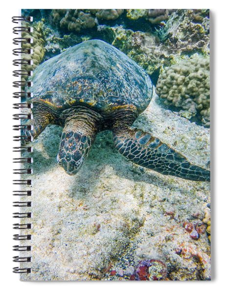 Swimming Turtle Spiral Notebook