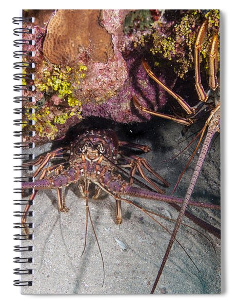 Up And Down Lobster Spiral Notebook