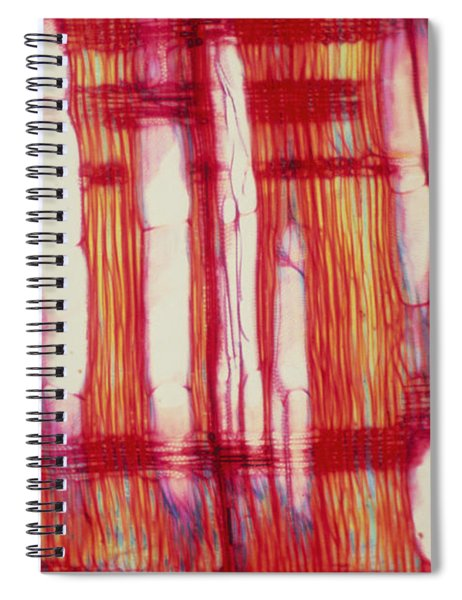 Vascular Rays And Vessel Elements Spiral Notebook