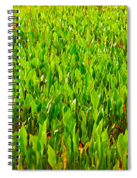 Vegetation, Boynton Beach, Florida, Usa Spiral Notebook