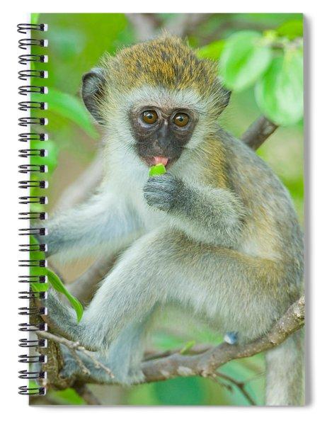 Vervet Monkey Sitting On A Branch Spiral Notebook