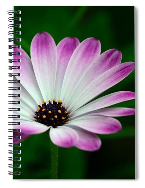Violet And White Flower Petals With Yellow Stamens Blossoms  Spiral Notebook