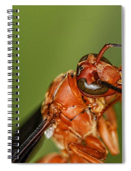 Wasp 1 Spiral Notebook
