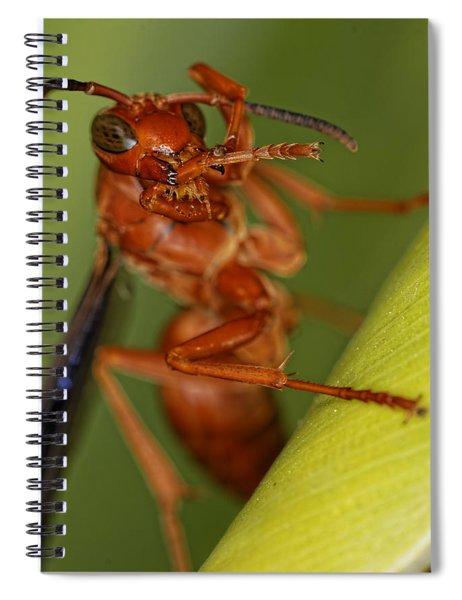 Wasp 3 Spiral Notebook