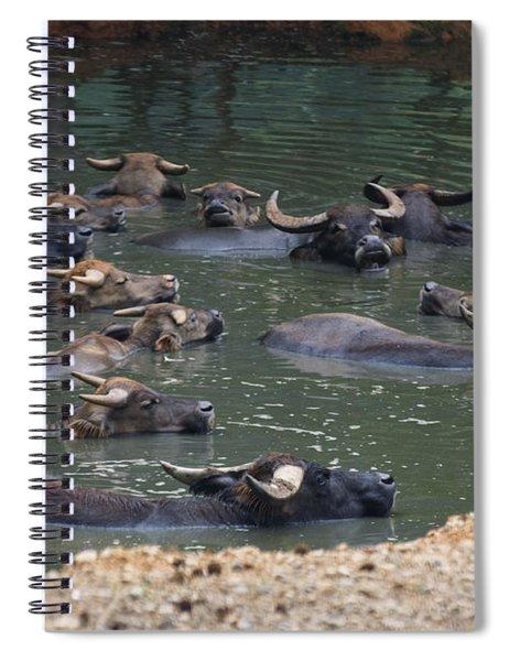 Water Buffalo Spiral Notebook