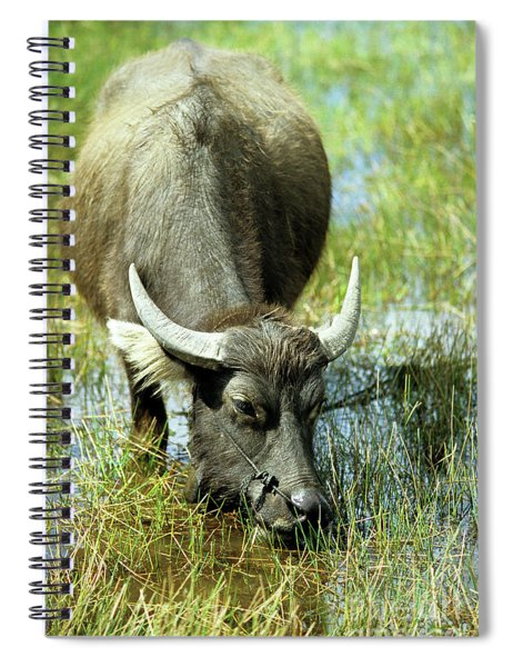 Water Buffalo Spiral Notebook