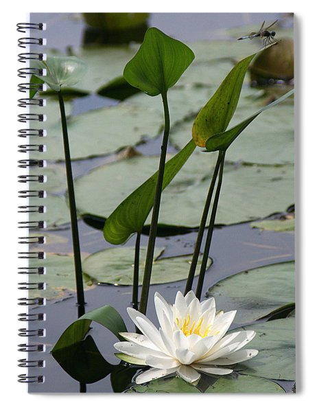 Water Lily In Bloom Spiral Notebook