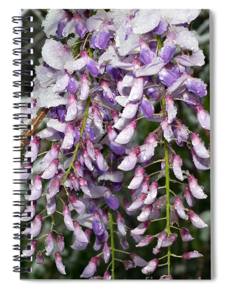Weeping Wisteria - Spring Snow - Ice - Lavender - Flora Spiral Notebook