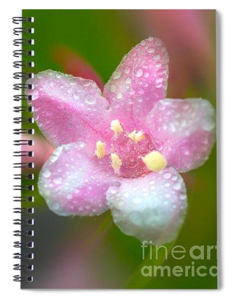 Weigela In Spring Spiral Notebook
