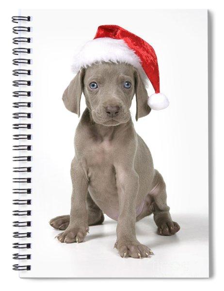 Weimaraner With Christmas Hat Spiral Notebook