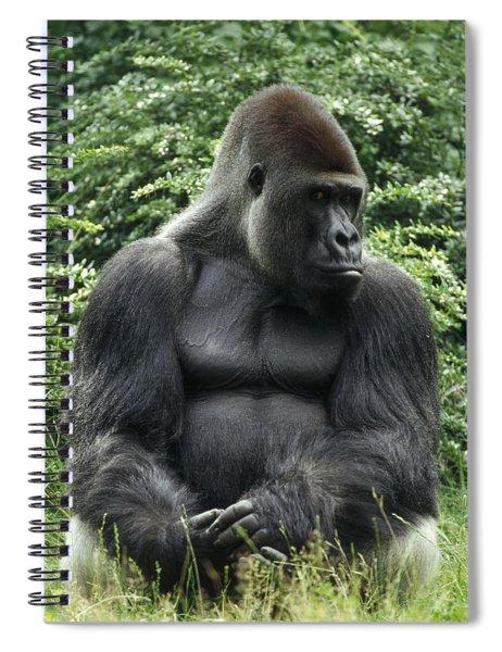 Western Lowland Gorilla Male Spiral Notebook