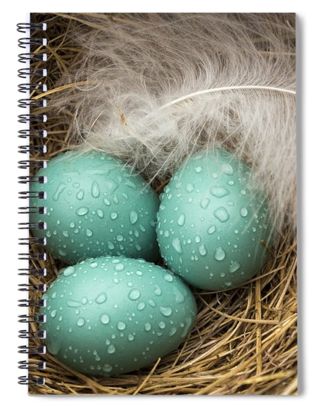 Wet Trio Of Robins Eggs Spiral Notebook