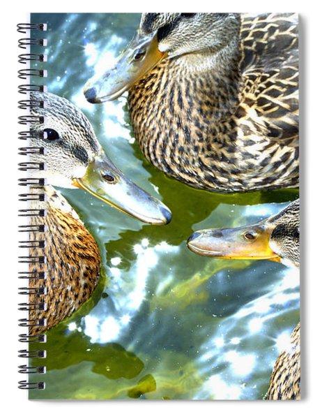 When Duck Bills Meet Spiral Notebook