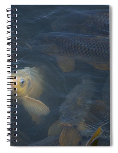 White Carp In The Lake Spiral Notebook