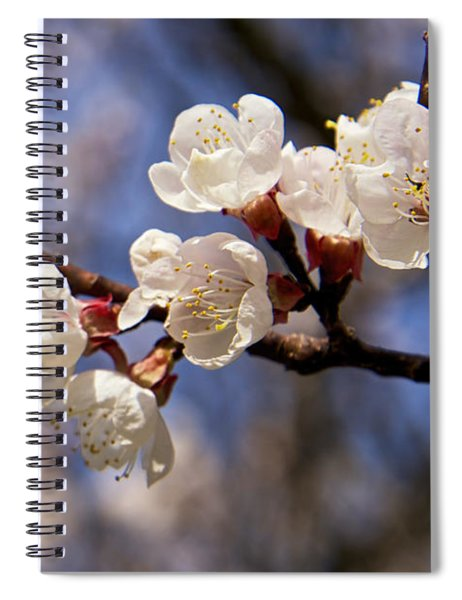 White Cherry Blossoms Spiral Notebook