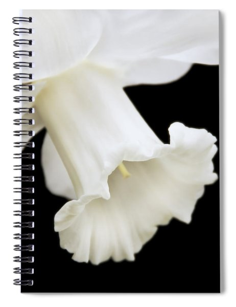 White Daffodil Flower Macro Spiral Notebook