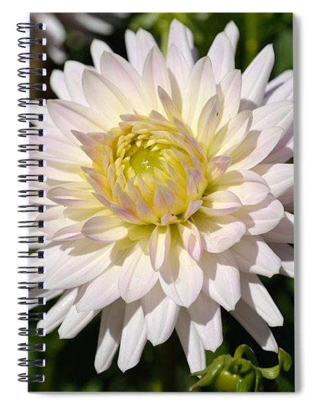 Spiral Notebook featuring the photograph White Dahlia Flower by Scott Lyons
