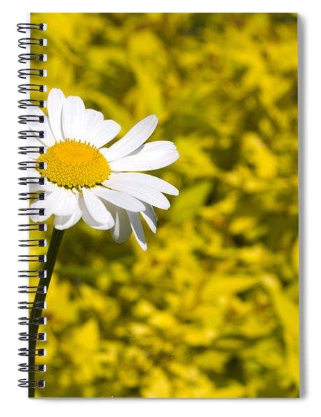 White Daisy In Yellow Garden Spiral Notebook