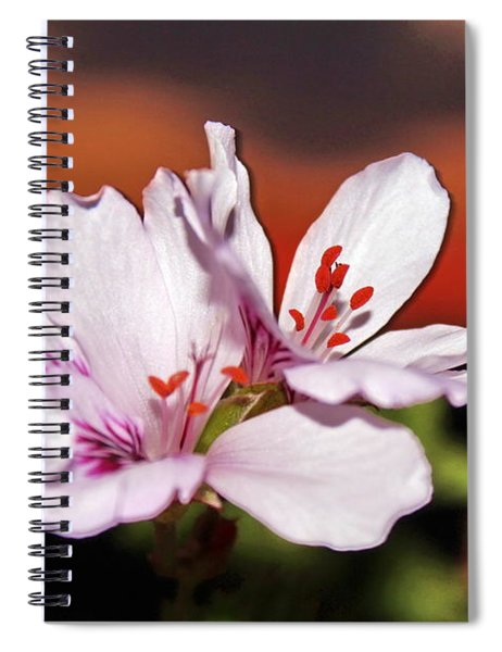 White Flowers And Orange Sunset By Julia Fine Art Spiral Notebook