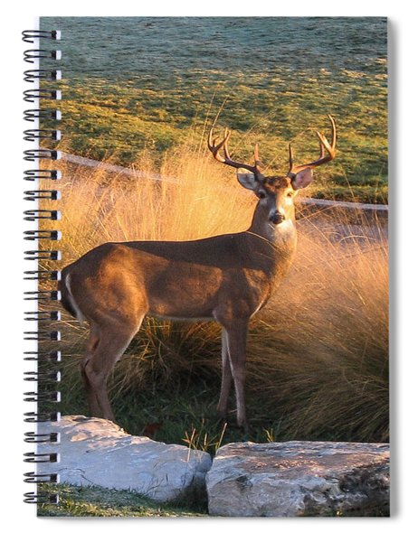White Tail Spiral Notebook