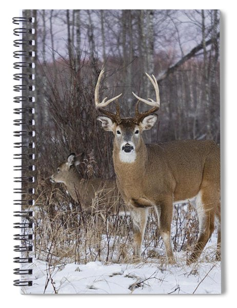 White-tailed Buck & Doe Spiral Notebook