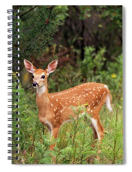 White-tailed Deer Fawn Odocoileus Spiral Notebook