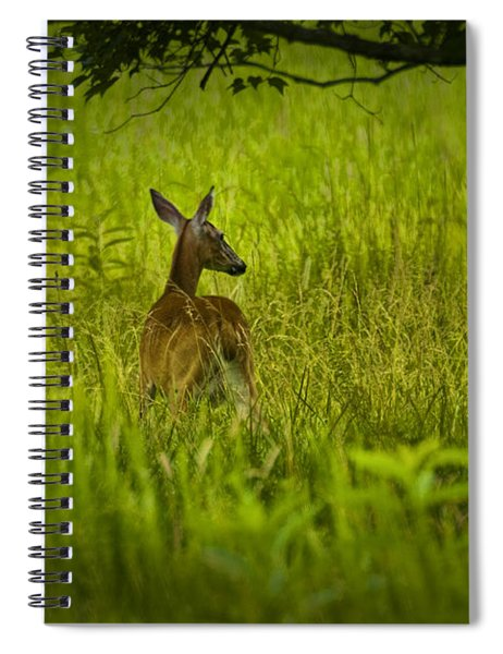 White Tailed Doe Deer In A Field In Cade's Cove Spiral Notebook