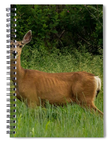 White-tailed Doe Spiral Notebook