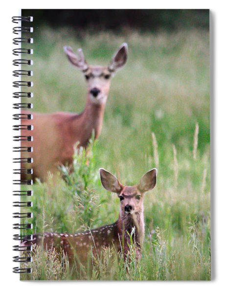 White-tailed Fawn Spiral Notebook