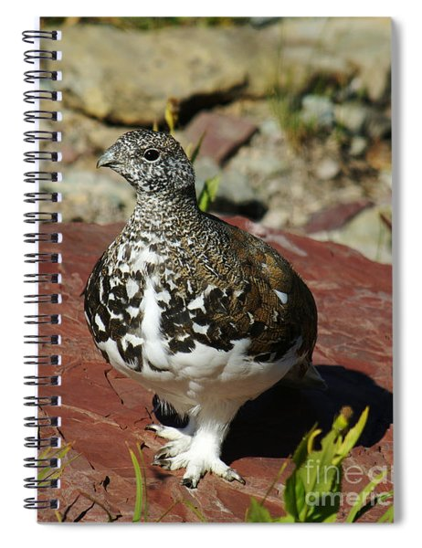 White-tailed Ptarmigan Spiral Notebook