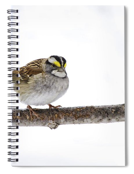 White-throated Sparrow Spiral Notebook
