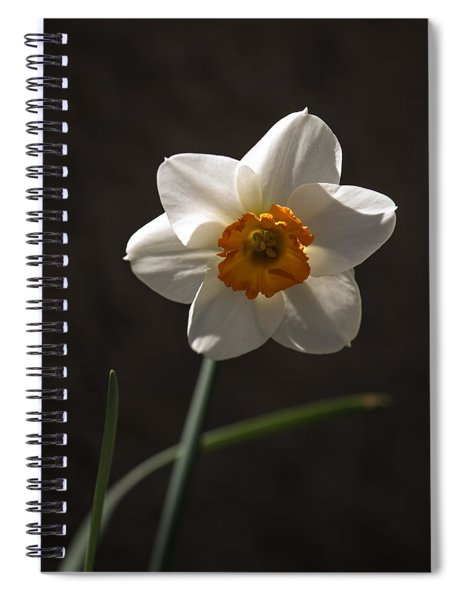 White Yellow Daffodil Spiral Notebook