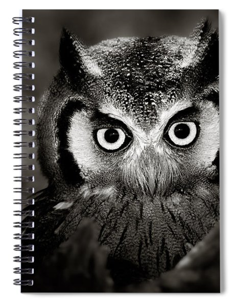 Whitefaced Owl Spiral Notebook