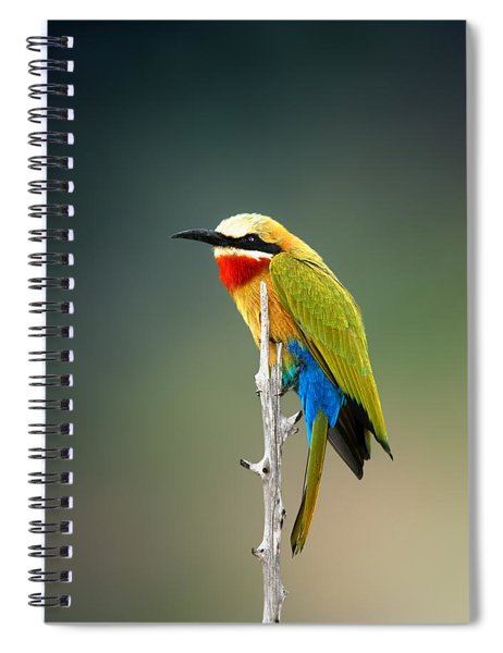 Whitefronted Bee-eater Spiral Notebook
