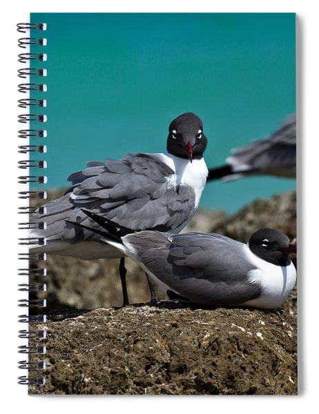 Why You Looking? Spiral Notebook