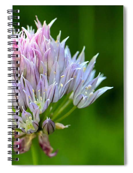 Wild Blue - Chive Blossom Spiral Notebook