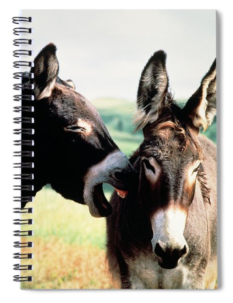 Wild Burros Custer State Park South Spiral Notebook