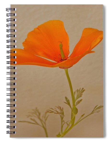Wild California Poppy No 1 Spiral Notebook