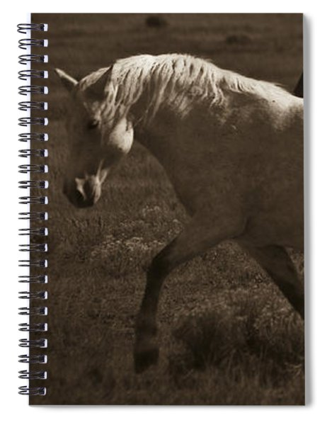 Wild Mustangs Of New Mexico 10 Spiral Notebook