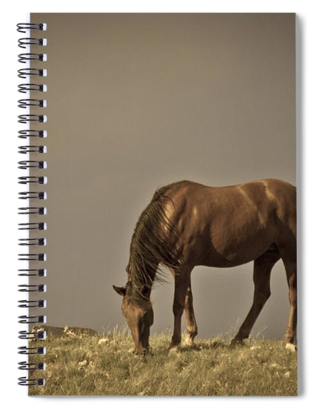 Wild Mustangs Of New Mexico 20 Spiral Notebook