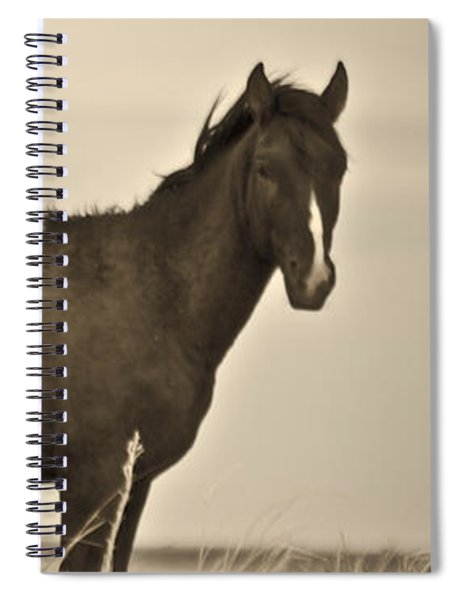 Wild Mustangs Of New Mexico 3 Spiral Notebook